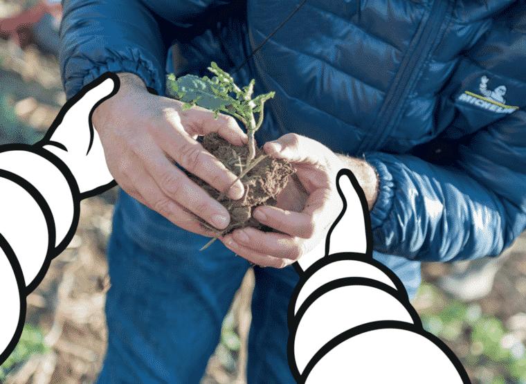 picto image mainplant zenaterra full agriculture