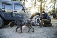 km3 jeep dog