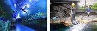 しながわ水族館 海中トンネル アザラシ